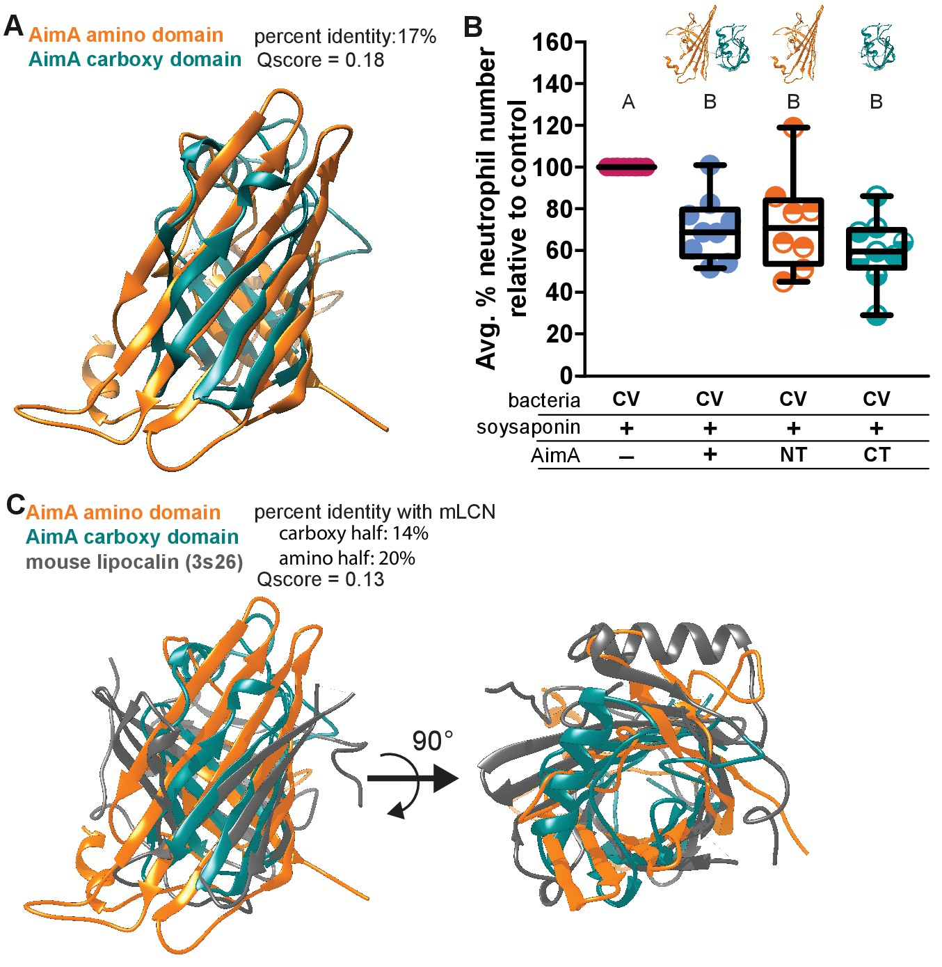 A bacterial immunomodulatory protein with lipocalin-like