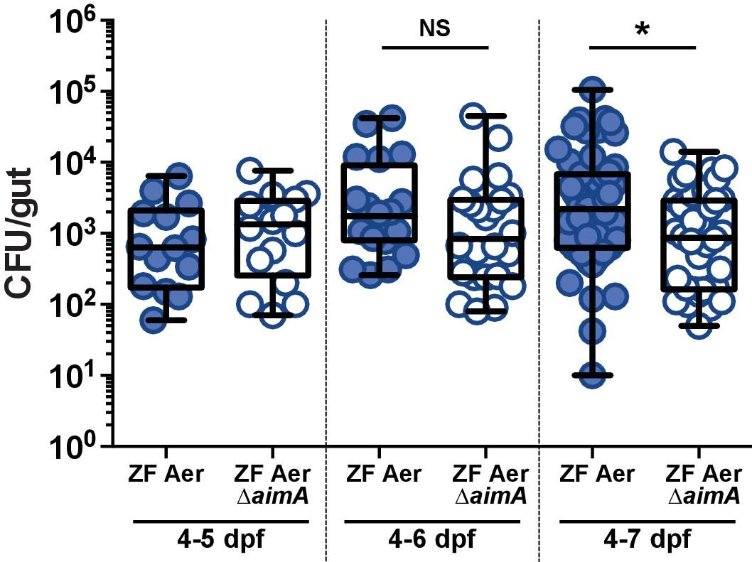 A bacterial immunomodulatory protein with lipocalin-like