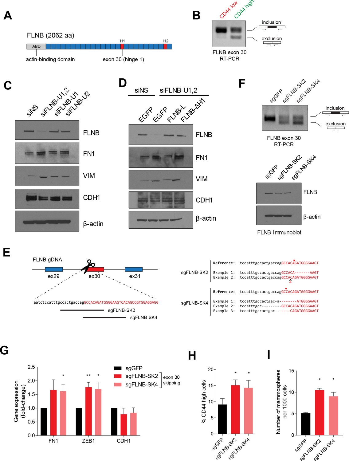 An Alternative Splicing Switch In Flnb Promotes The Mesenchymal Cell Ledcircuitcalculator Circuit Playground 163 Resistor Power Isoform Switching State A Schematic