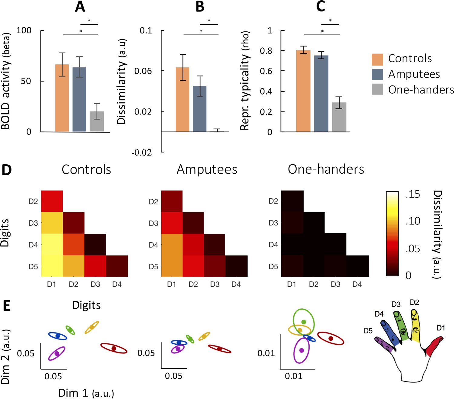 Obtaining and maintaining cortical hand representation as