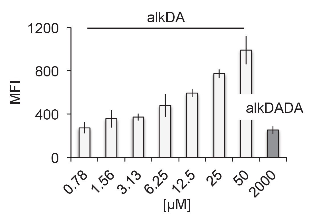 Peptidoglycan precursor synthesis along the sidewall of pole-growing