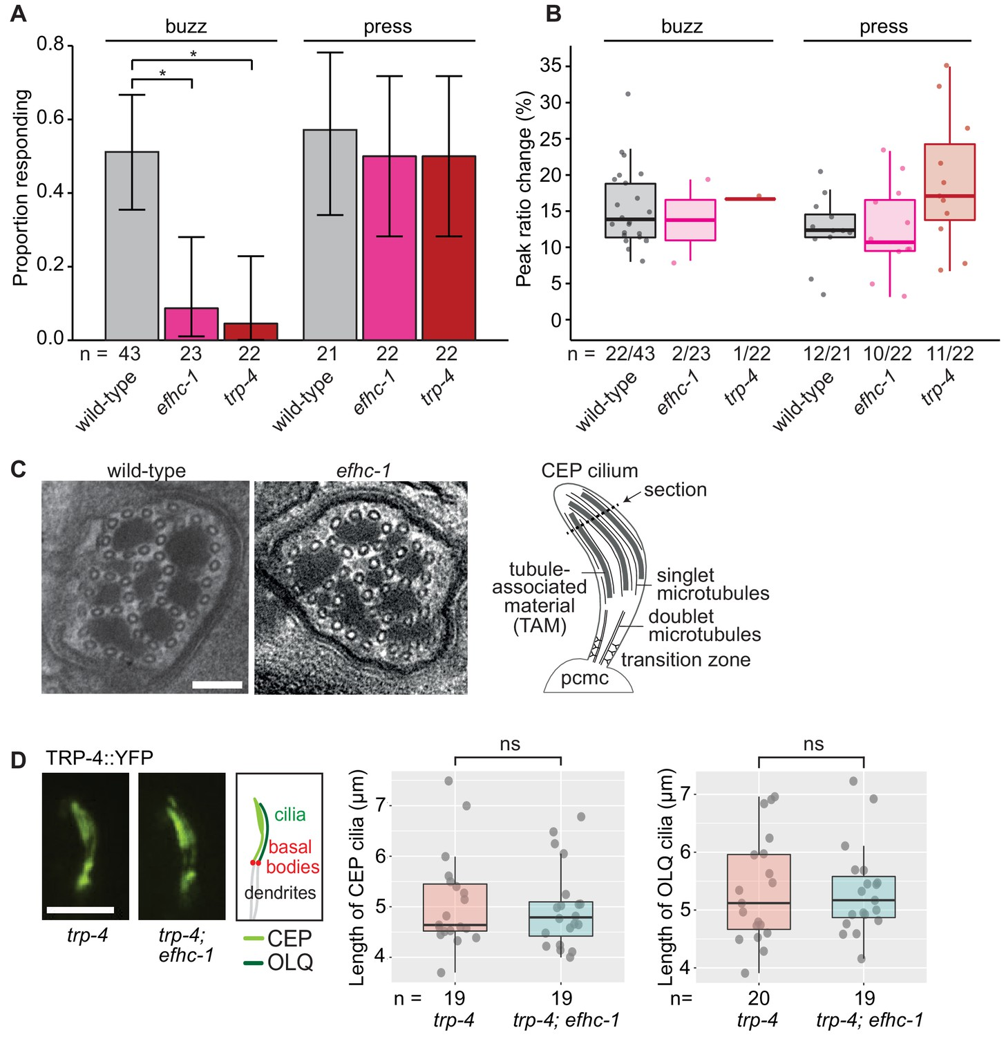 EFHC1, implicated in juvenile myoclonic epilepsy, functions