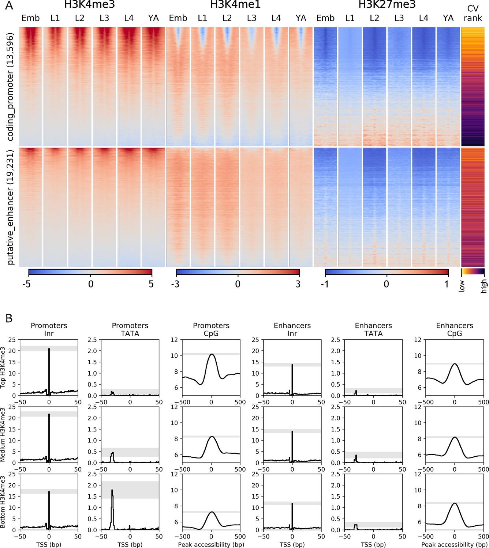 Chromatin accessibility dynamics across C  elegans development and