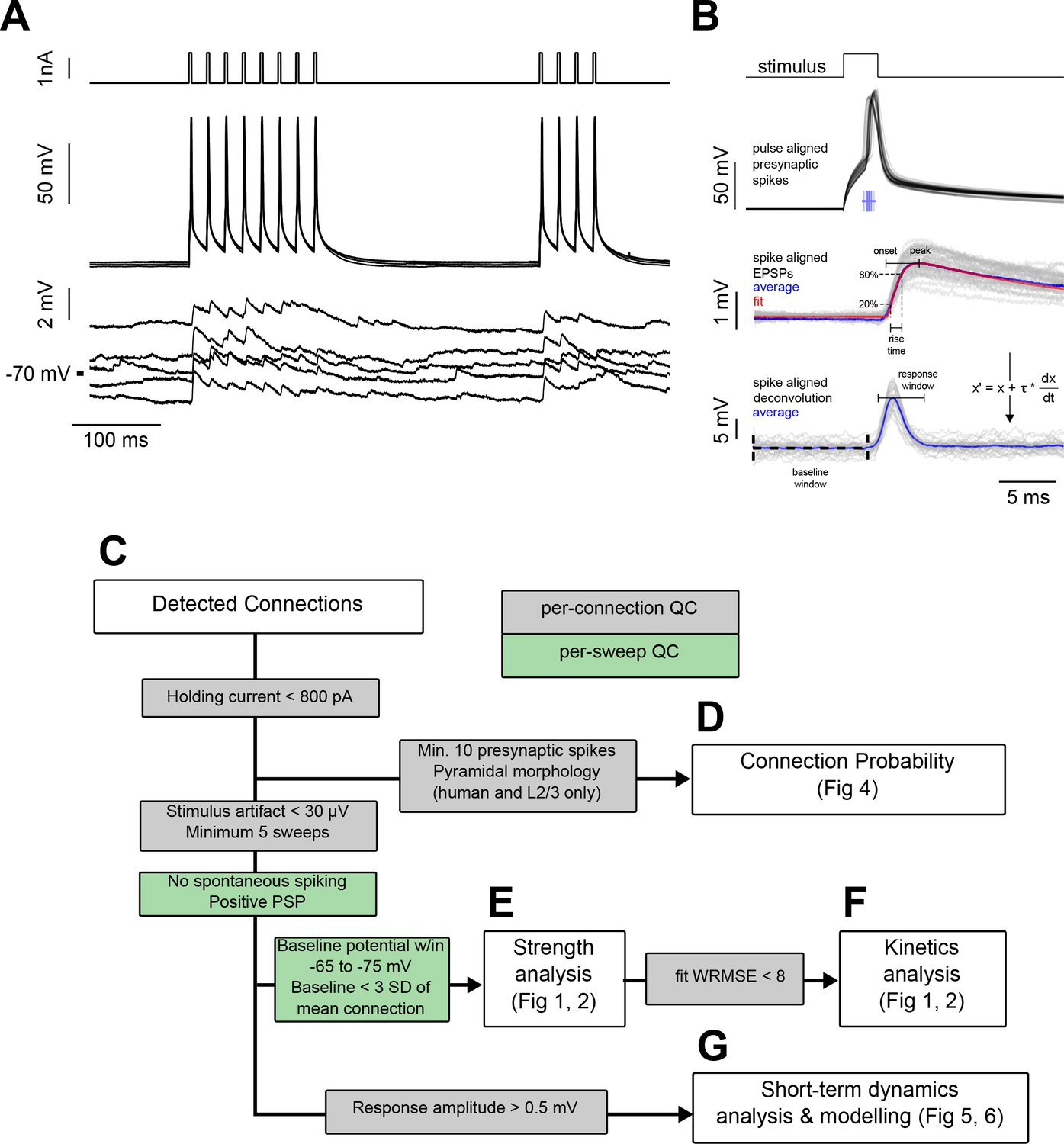 Sparse recurrent excitatory connectivity in the microcircuit of the