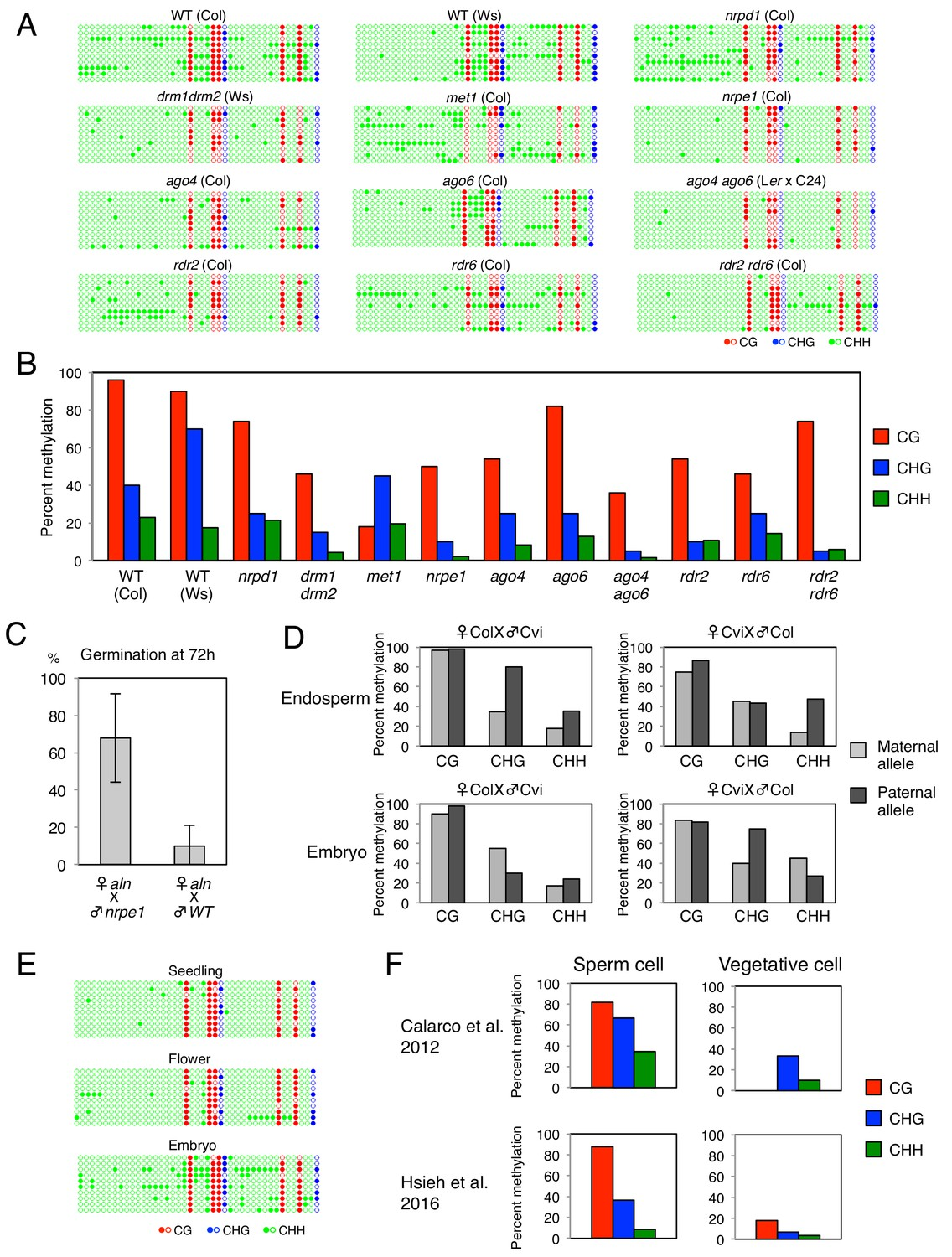 Non-canonical RNA-directed DNA methylation participates in