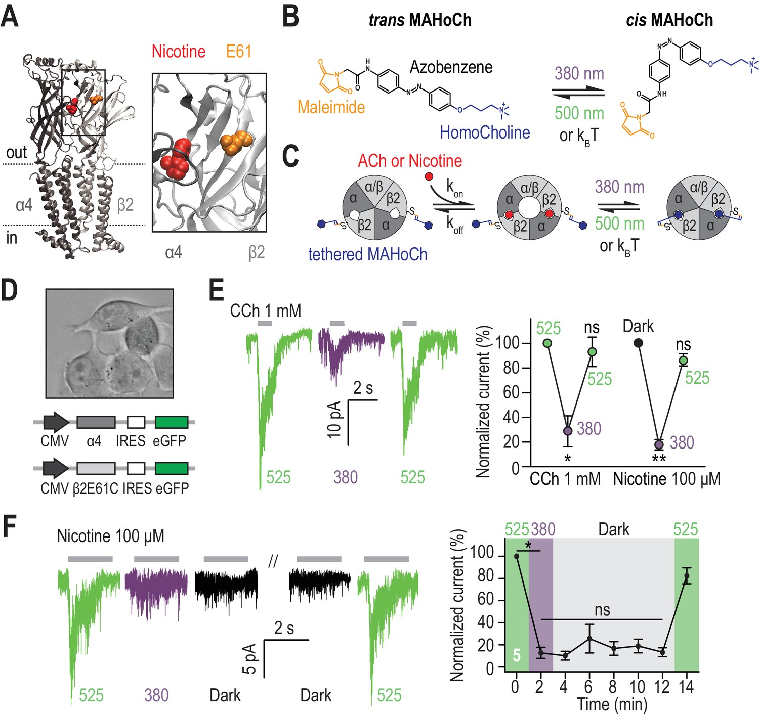 Manipulating Midbrain Dopamine Neurons And Reward Related Behaviors In The Above Circuit When Toggle Switch Is Open As Shown 12 Design Characterization Of 2linachr