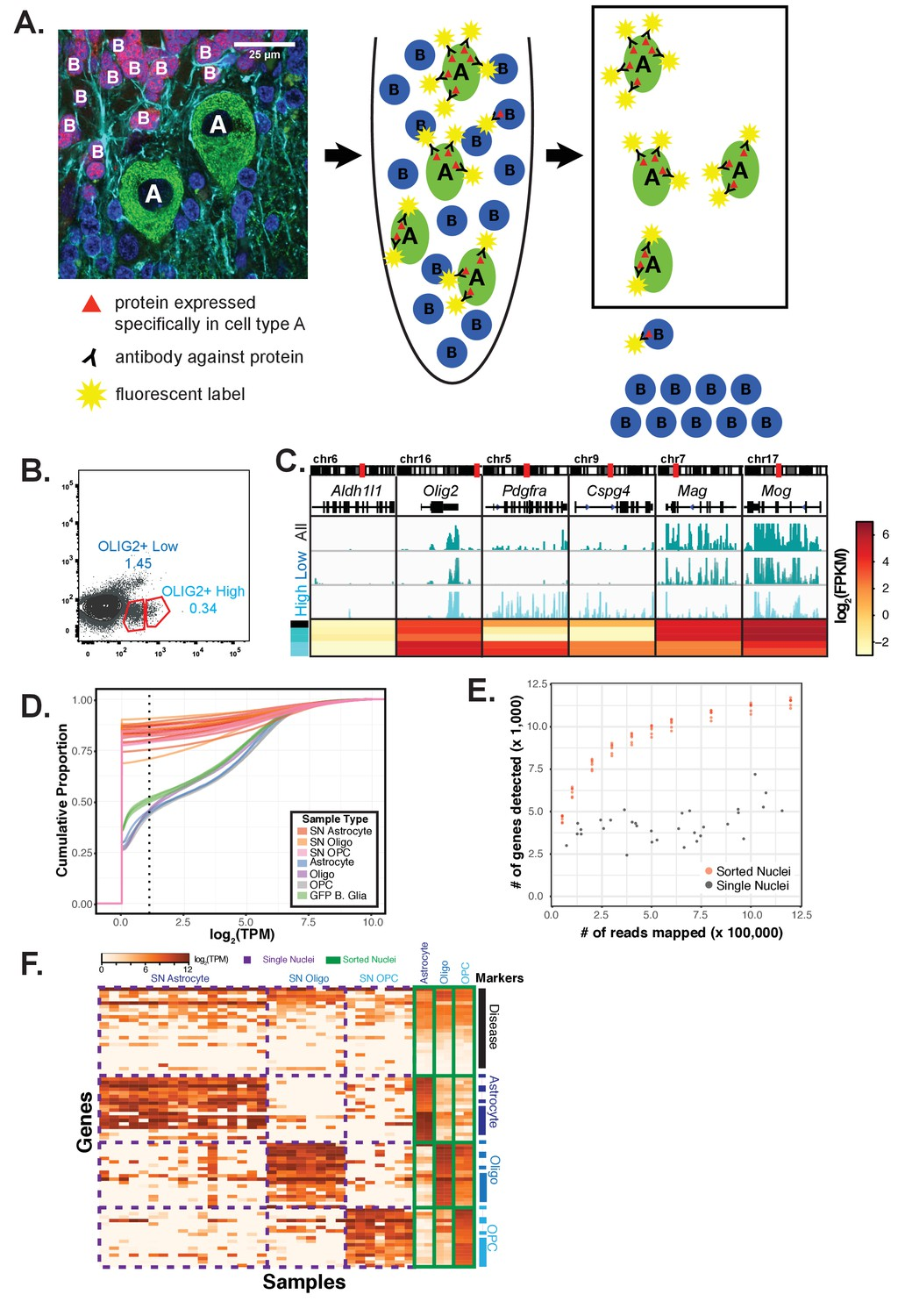 Species and cell-type properties of classically defined human and