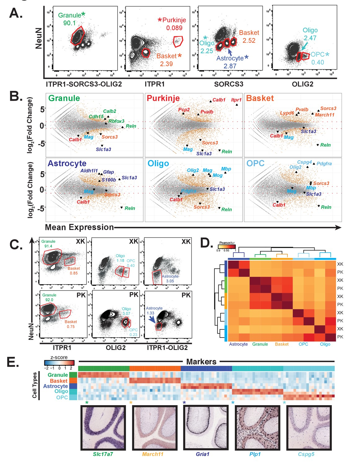 Species And Cell Type Properties Of Classically Defined Human Snap Circuits Xp Control With Your Computer Generation Gene Expression Profiles For Distinct Types From Rat Cerebella