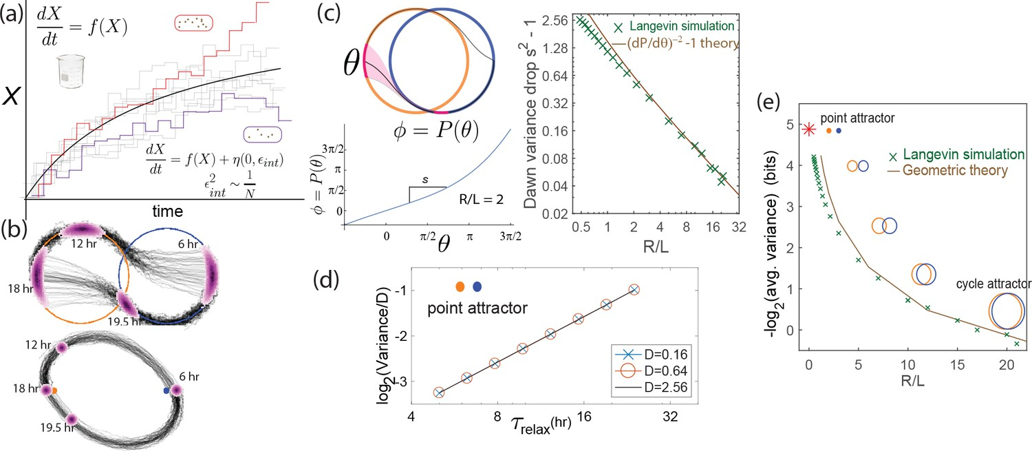 Biophysical Clocks Face A Trade Off Between Internal And External J 4020 24 Volt Wiring Fluctuations Severely Affect Continuous Attractors But Not Point