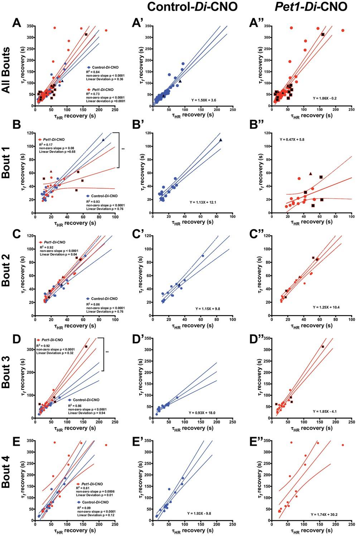 Acute perturbation of Pet1-neuron activity in neonatal mice impairs