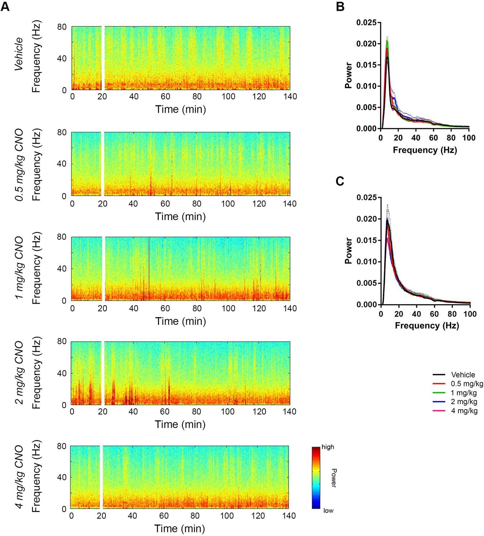 CA2 neuronal activity controls hippocampal low gamma and