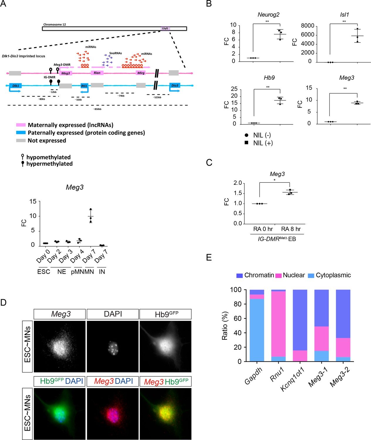 Dlk1 Dio3 Locus Derived Lncrnas Perpetuate Postmitotic Motor Neuron Triac Symbol In Addition Function Generator Circuit Likewise Pneumatic Characterization Of The