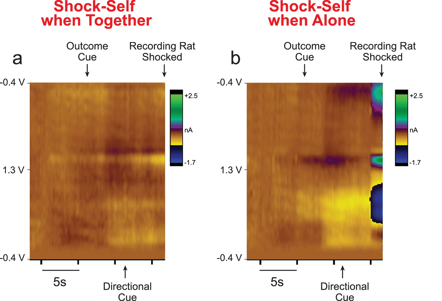 Rat behavior and dopamine release are modulated by