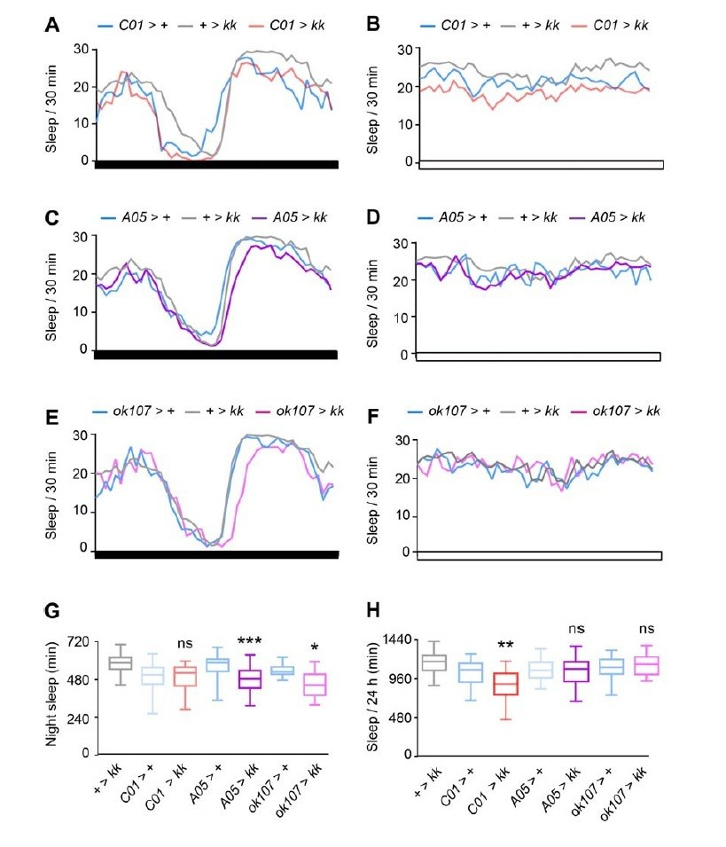 Neurocalcin regulates nighttime sleep and arousal in