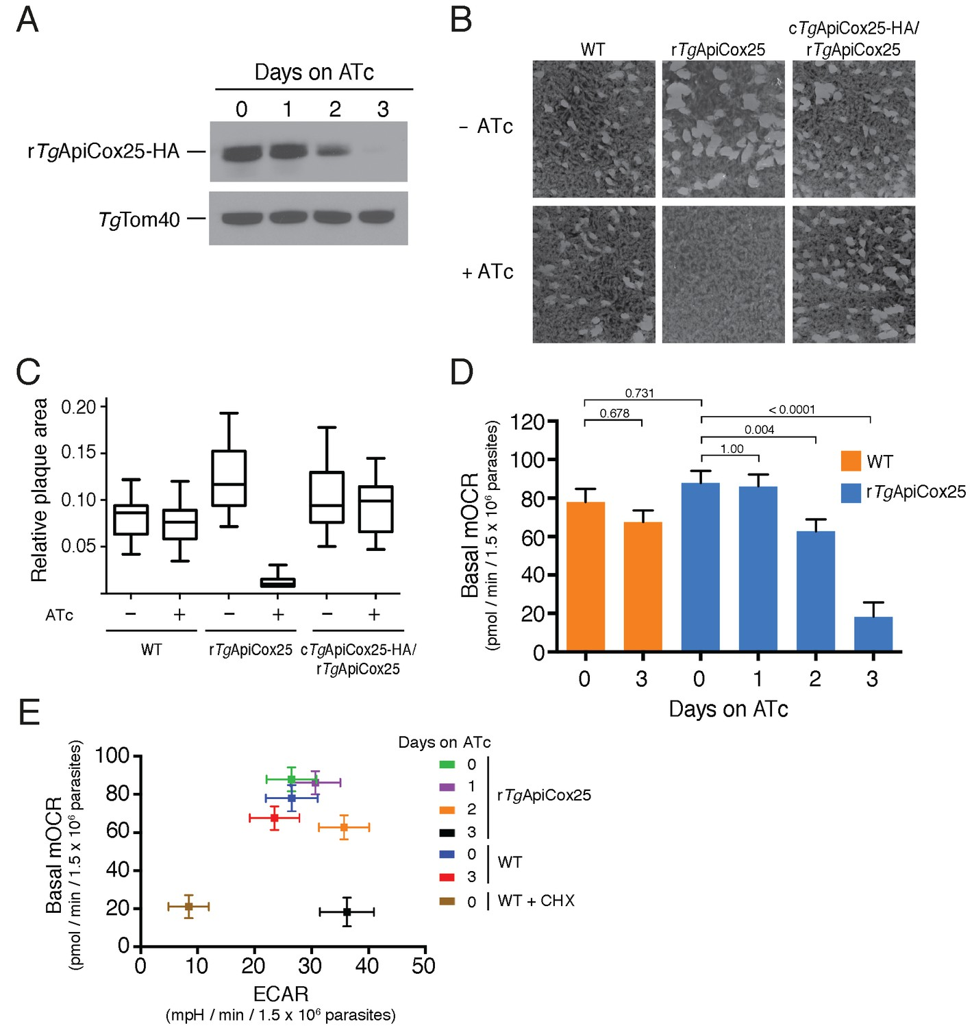 Elucidating the mitochondrial proteome of Toxoplasma gondii reveals