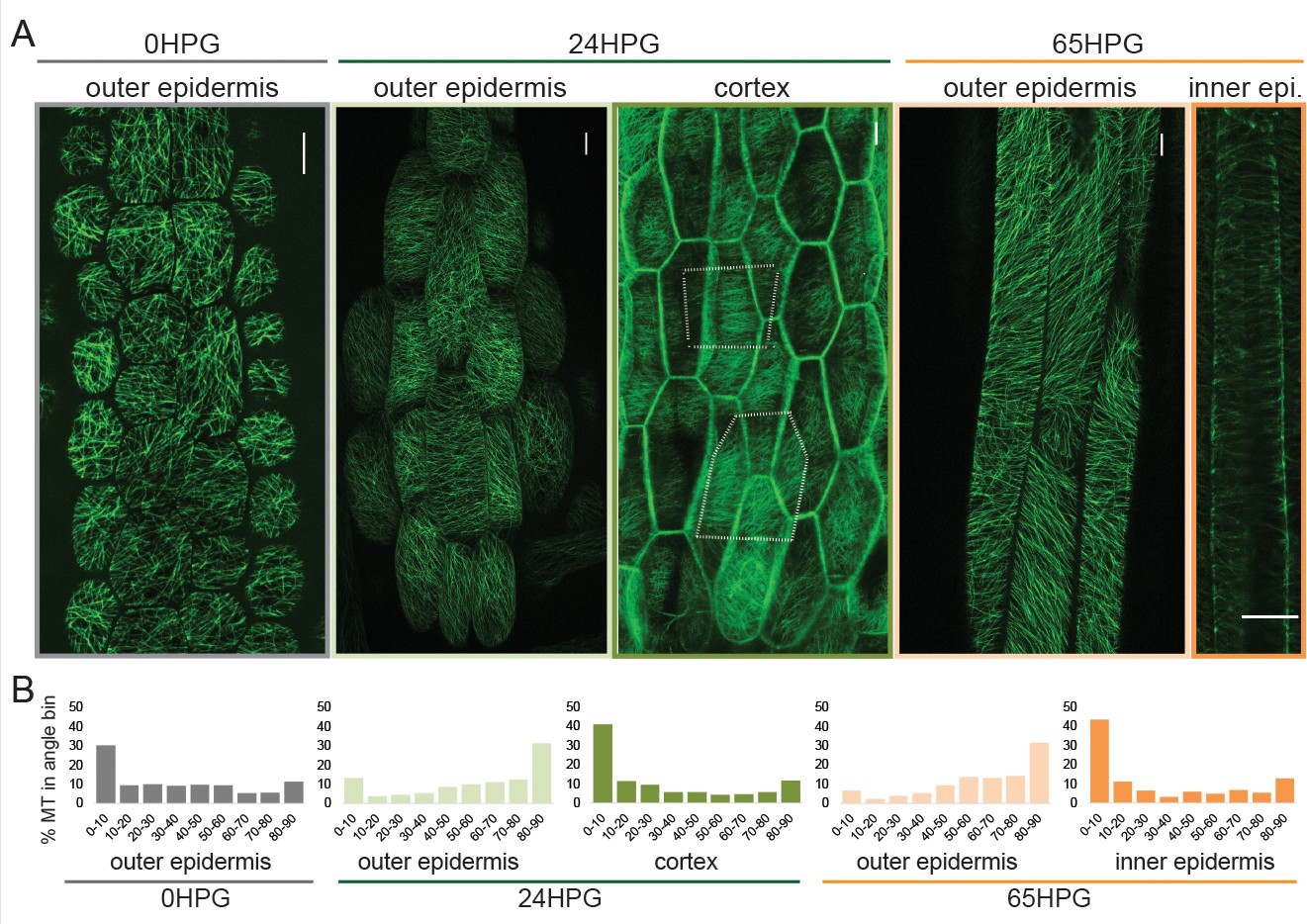 Anisotropic growth is achieved through the additive