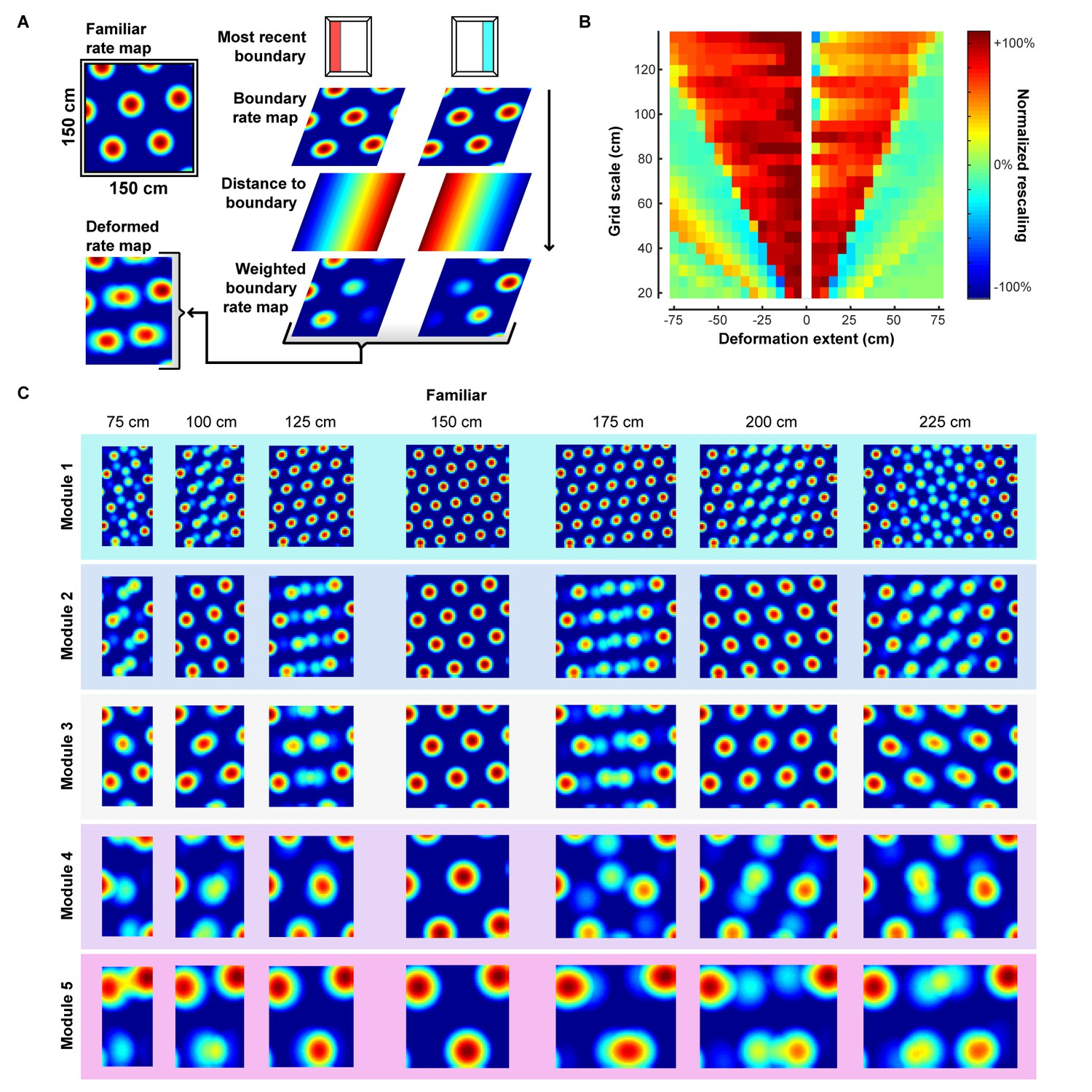 Environmental deformations dynamically shift the grid cell