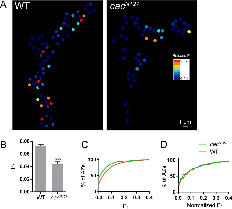 Characterization of developmental and molecular factors underlying ... 87ddb78bc8ad8