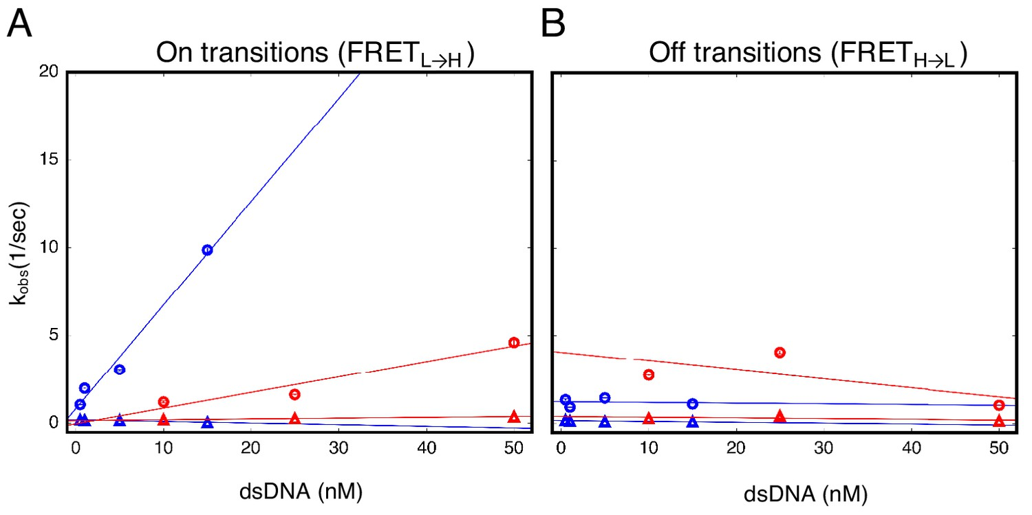 Functional instability allows access to DNA in longer