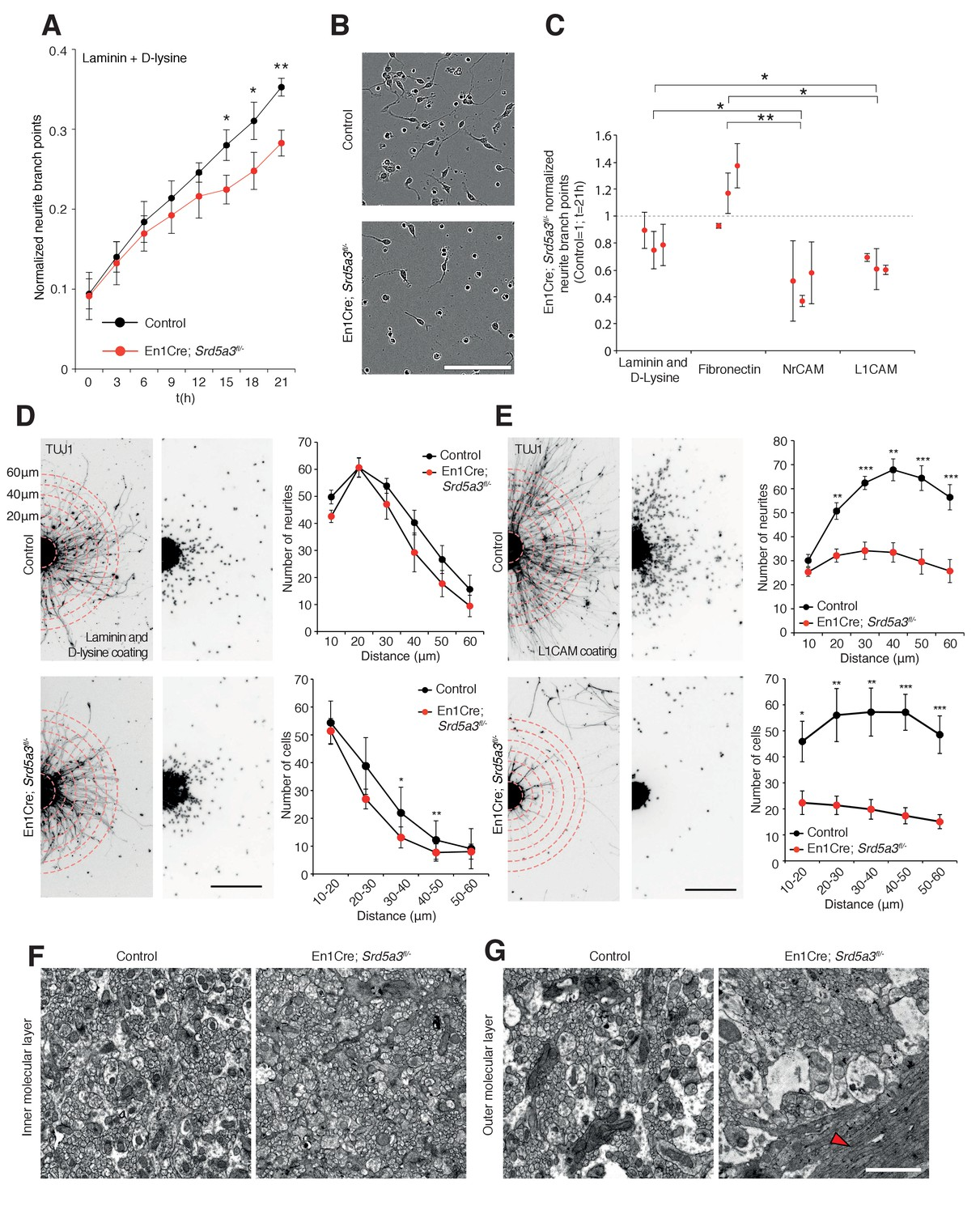 High N Glycan Multiplicity Is Critical For Neuronal Adhesion And Engine Diagram Additionally 2006 07 Honda Odyssey Left Driver Side Igsf Cam Dependent Neurite Dynamic Axon Orientation Defects In Srd5a3 Mutant Cerebellum