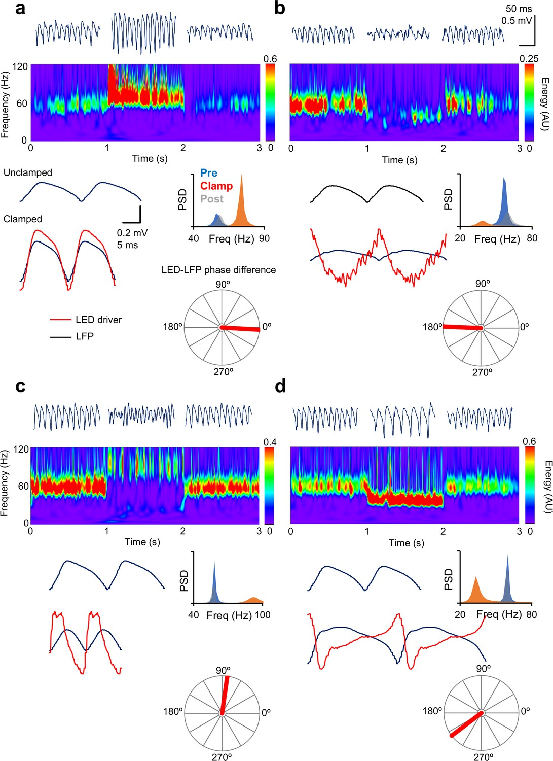 Analogue closed-loop optogenetic modulation of hippocampal pyramidal