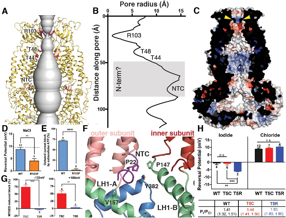 Figures And Data In Structure Of The Human Volume Regulated Anion 15v Symmetrical Power Supply Circuit Diagram Composed Ion Pore Characterization Channels With Mutations At Contributing Residues R103 T5