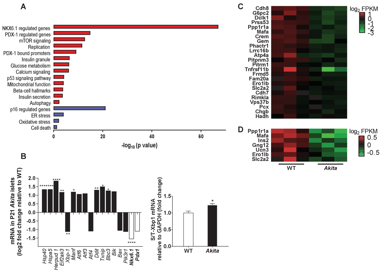 Inhibition of mTORC1 by ER stress impairs neonatal β-cell