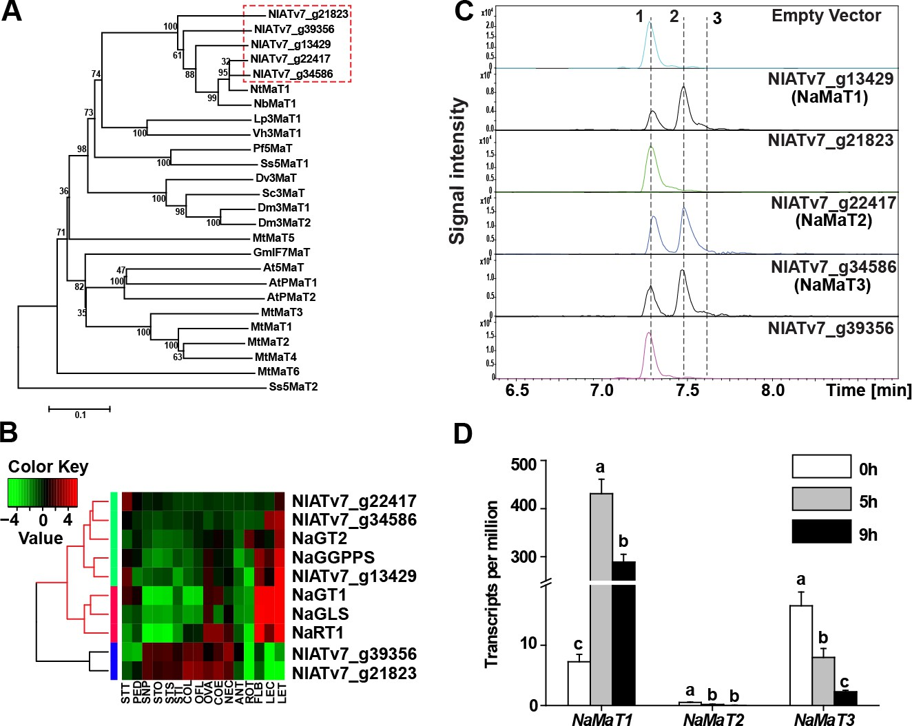 The decoration of specialized metabolites influences stylar