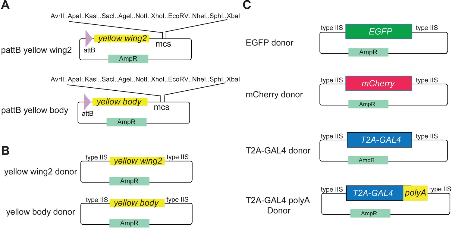 An Expanded Toolkit For Gene Tagging Based On Mimic And Scarless