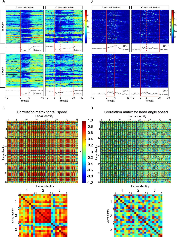 Sensorimotor pathway controlling stopping behavior during chemotaxis