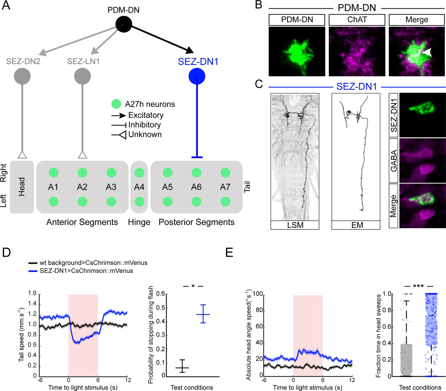 Sensorimotor pathway controlling stopping behavior during chemotaxis
