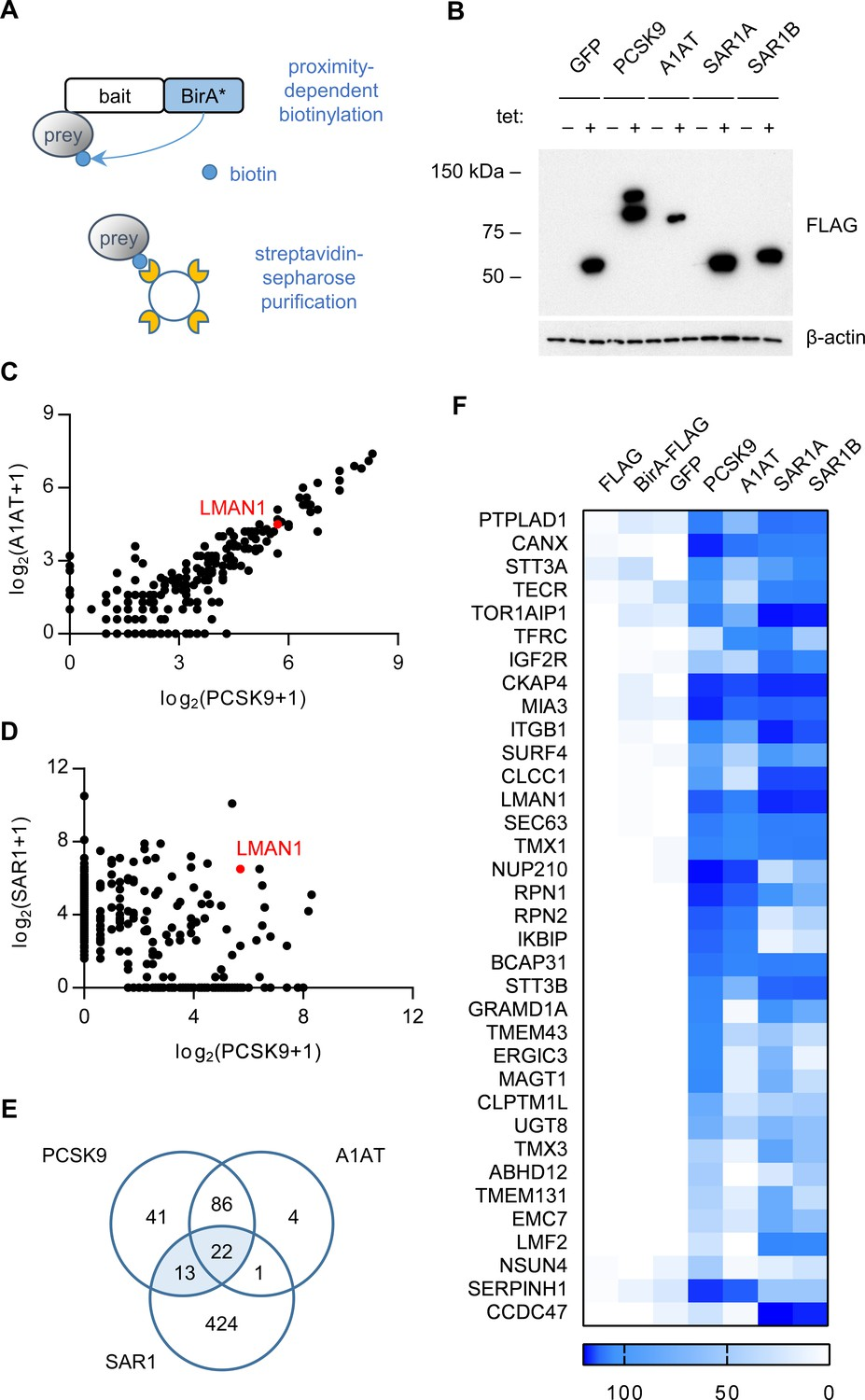 The Cargo Receptor Surf4 Promotes Efficient Cellular Secretion Moonshine Diagram Related Keywords Suggestions Proximity Dependent Biotinylation With A Pcsk9 Bira Fusion