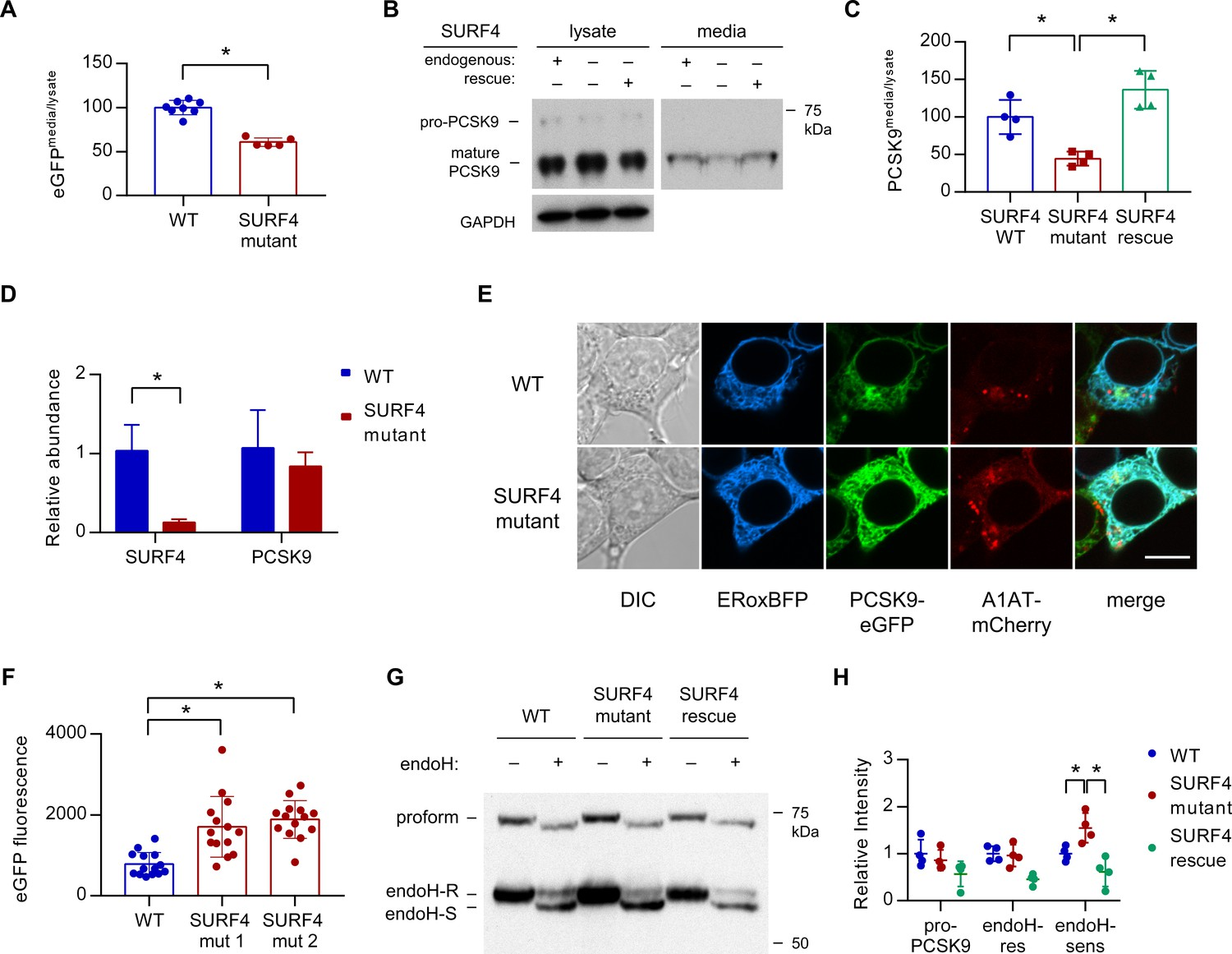 The Cargo Receptor Surf4 Promotes Efficient Cellular Secretion Moonshine Diagram Related Keywords Suggestions Mutagenesis Causes A Decrease In Pcsk9 Extracellular And An Accumulation Of Er