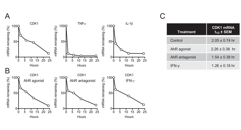 The aryl hydrocarbon receptor and interferon gamma generate