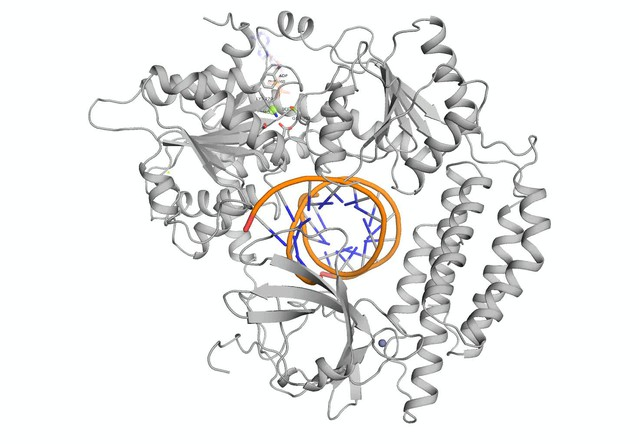 Unified Mechanisms For Self Rna Recognition By Rig I Singleton