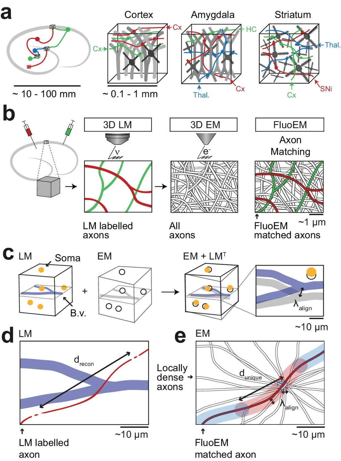 Fluoem Virtual Labeling Of Axons In Three Dimensional Electron Standard B Moreover Cat 5 Connectors Diagram Along With 5e Vs Applications And Concept
