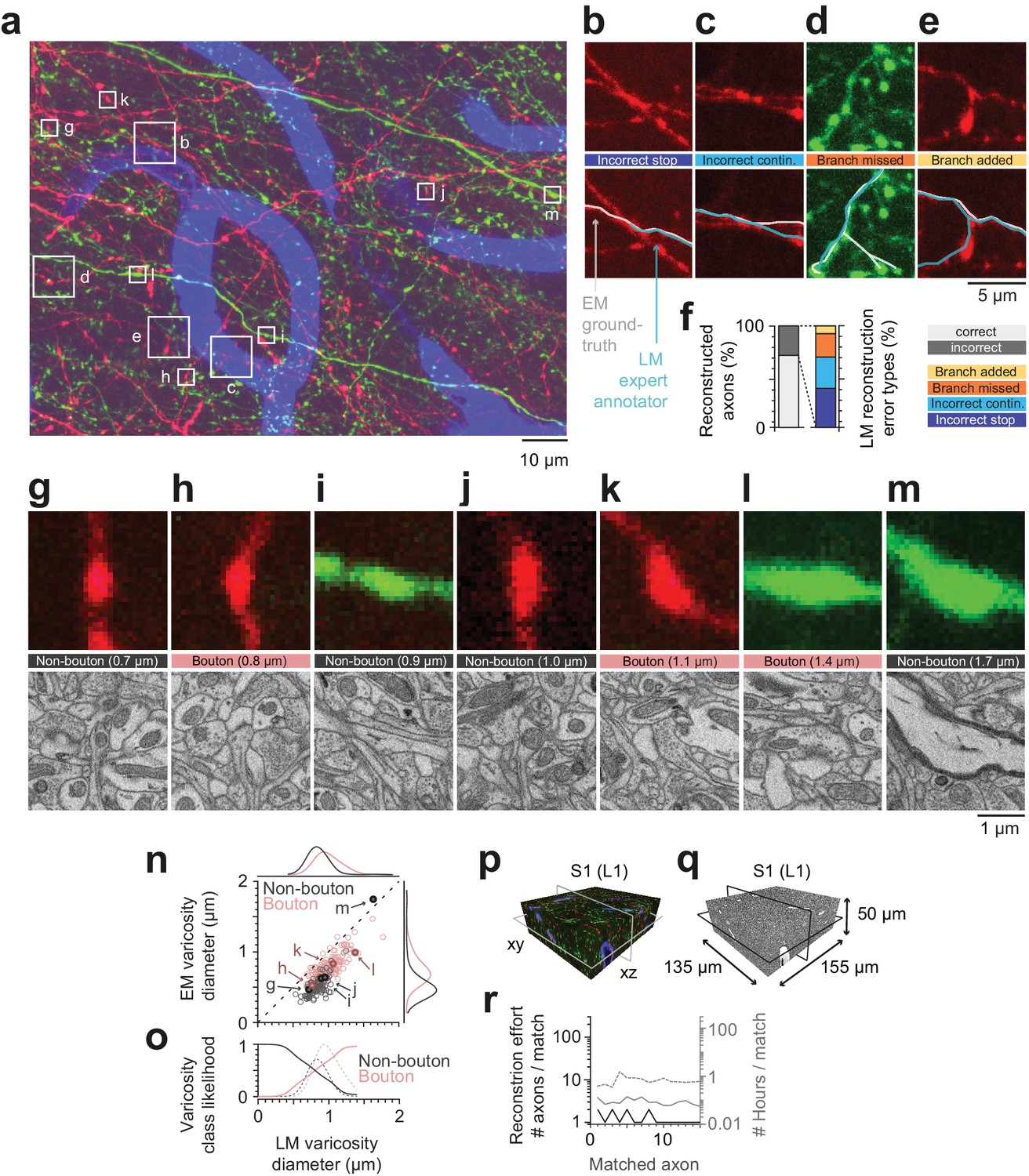 FluoEM, virtual labeling of axons in three-dimensional electron