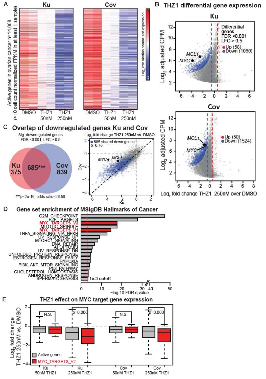 Targeting MYC dependency in ovarian cancer through inhibition of
