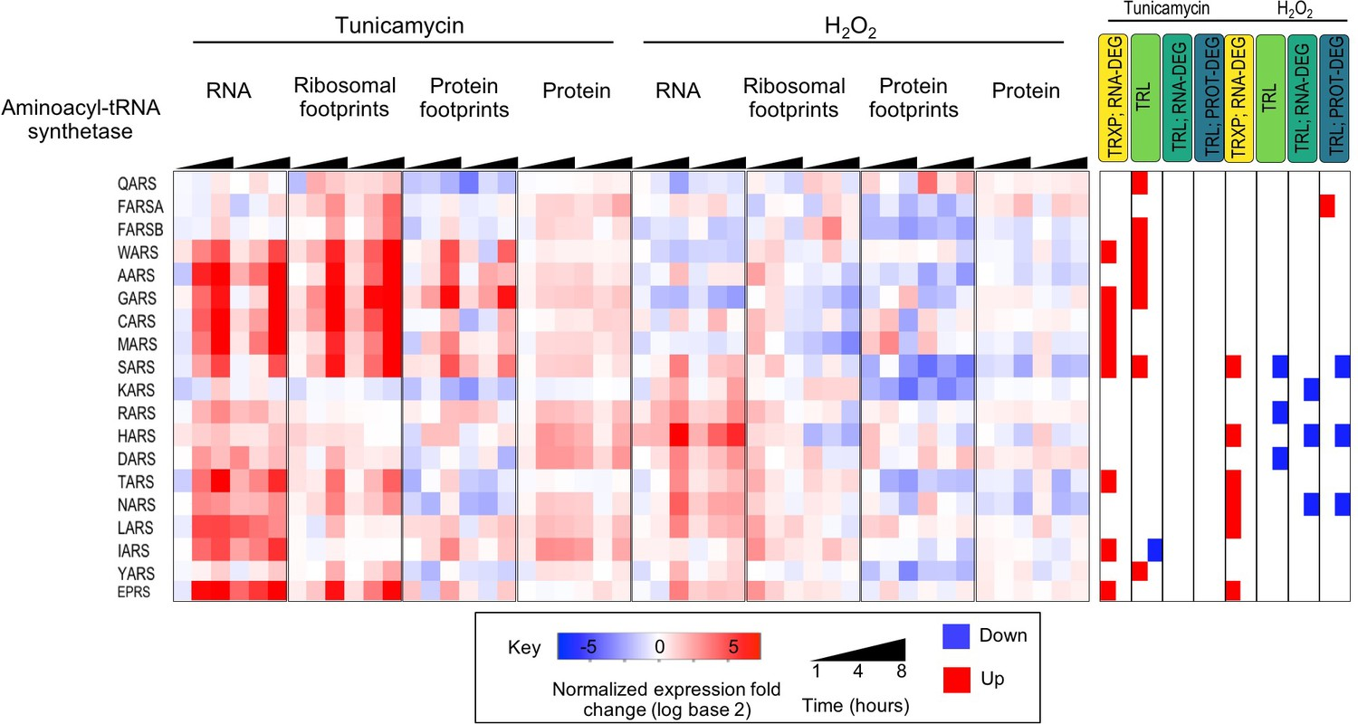 New insights into the cellular temporal response to