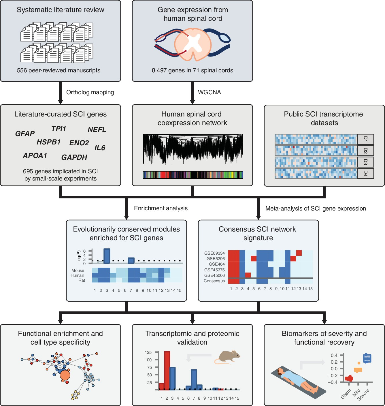 Integrated systems analysis reveals conserved gene networks