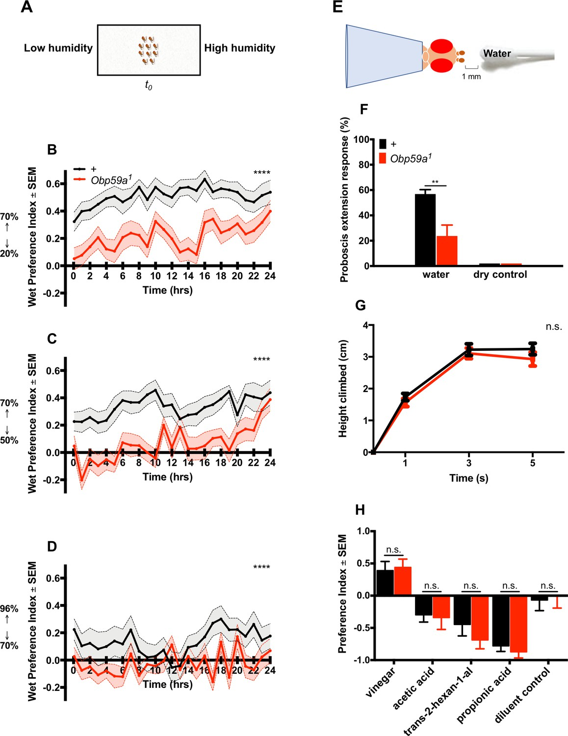 e0e60000e2c Humidity response depends on the small soluble protein Obp59a in ...