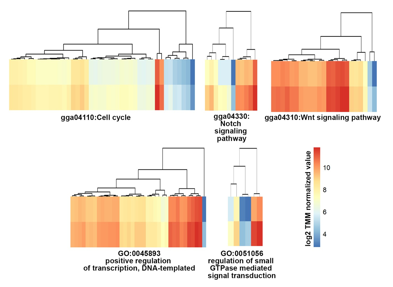 genetic memory activation