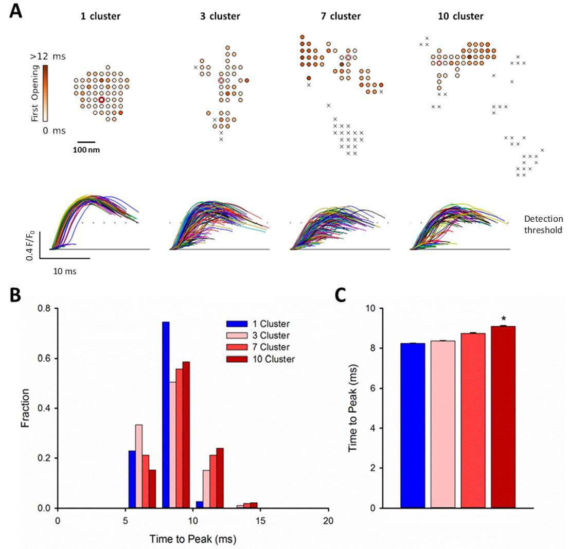 Ryanodine receptor dispersion disrupts Ca2+ release in