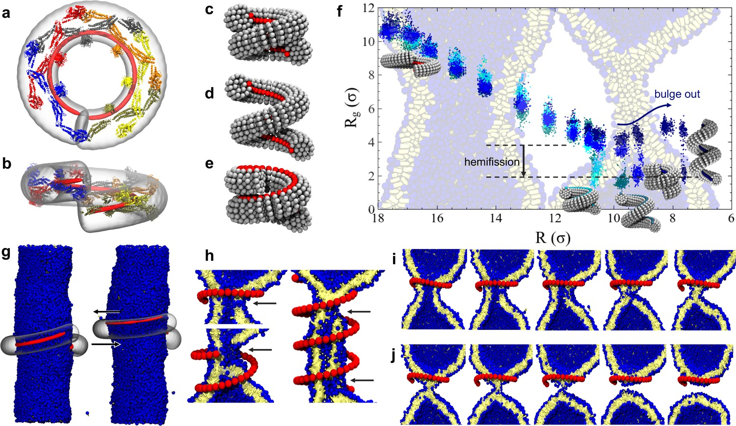 The role of scaffold reshaping and disassembly in dynamin driven