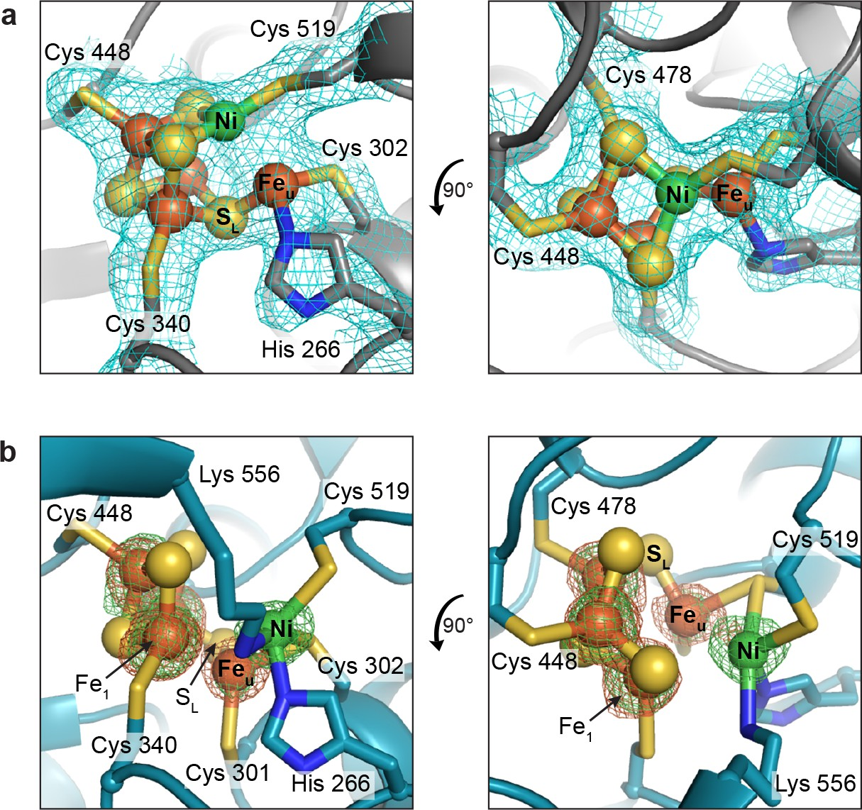 Redox-dependent rearrangements of the NiFeS cluster of carbon