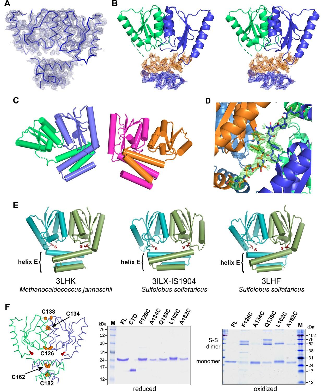 Multiple serine transposase dimers assemble the transposon