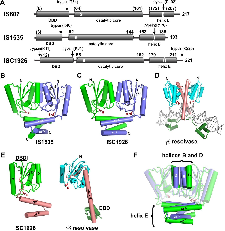 Multiple serine transposase dimers assemble the transposon-end