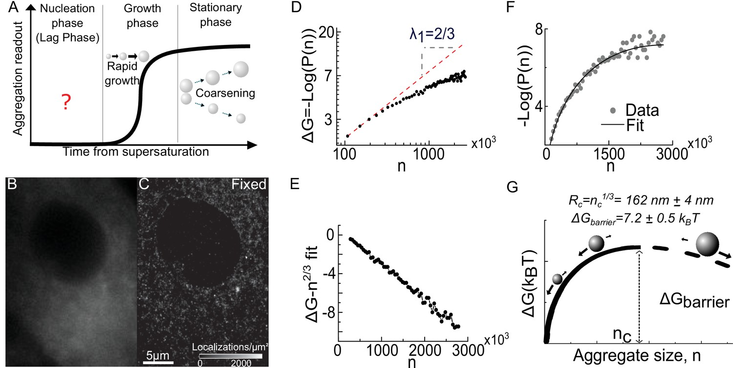 A first order phase transition mechanism underlies protein
