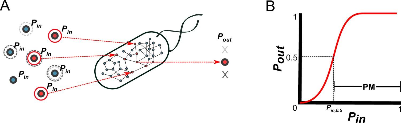 Metabolic network percolation quantifies biosynthetic