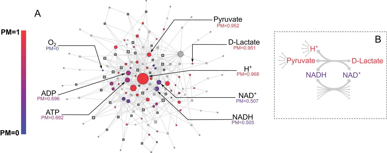 e  coli core metabolic network metabolite producibility
